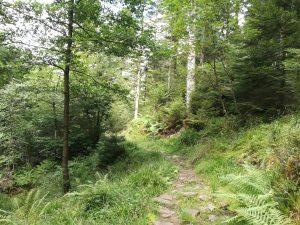 Waldweg - Es gibt kein Unkraut