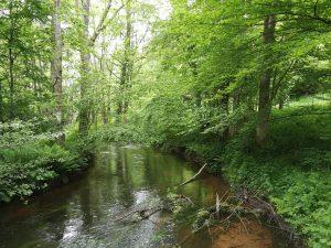 Entlang eines Flusses