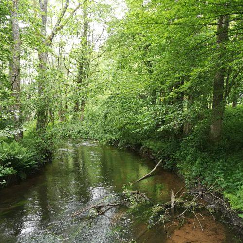 Der Fluss als Wegbegleiter