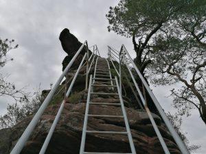 Leiter auf die Felsen - Es gibt kein Unkraut