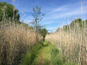 Weg über die Felder - Es gibt kein Unkraut