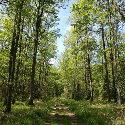 Himmlische Waldwege