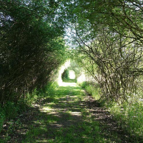 Tor in die Natur