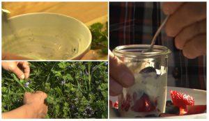 Gundermanncreme mit Erdbeeren - Es gibt kein Unkraut